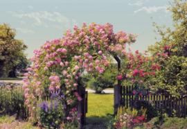 Rose Garden 8-936 Komar rozen tuin