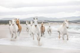 White Horses 8-986 Komar paard