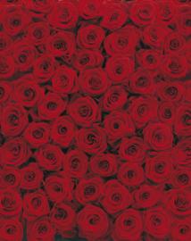 Roses 4-077 Komar
