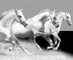 Horses B/W 3750029 Farm Life behangrand