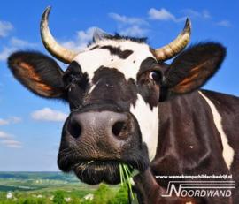 Mooo 3750067A - 3750076B Farm Life koe
