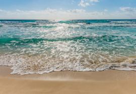 Seaside 8-983 Komar
