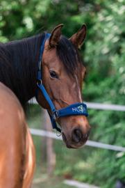 Halster Horse in Mind