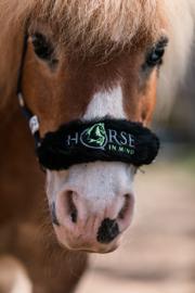 Neusbontje Horse in Mind