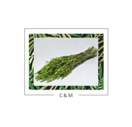 Haver groen - 70 cm