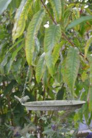 Hangende vogelschaal