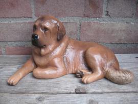 beeld Tibetaanse Mastiff