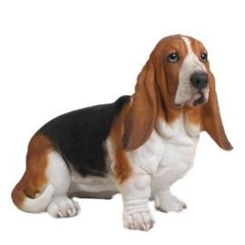 beeld/asbeeld/urn Basset hound | 53 cm