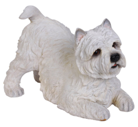 beeld/asbeeld/urn West Highland White Terriër | 33 cm