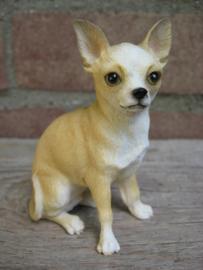 beeldje Chihuahua korthaar tan-wit