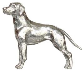 miniatuur Rhodesian Ridgeback  zilvertin