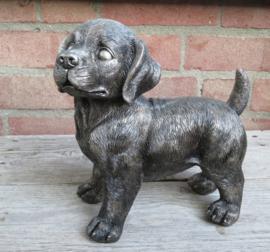 asbeeld/urn Labrador puppy staand