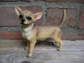beeldje Chihuahua korthaar staand