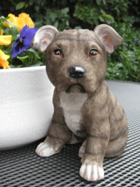 beeldje/asbeeldje/urn Staffordshire Terriër puppy bruin