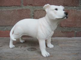 beeldje Staffordshire Bull Terriër wit
