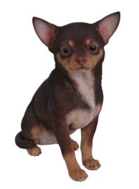 beeld/asbeeld/urn Chihuahua choco-tan |23 cm