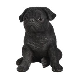 beeldje/asbeeldje/urn Mopshond zittend zwart