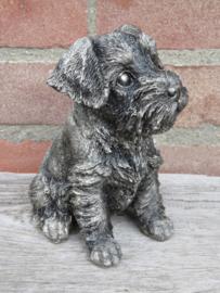 asbeeldje/urn (Dwerg)schnauzer puppy