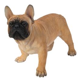 beeld/asbeeld/urn Franse Bulldog beige | 50 cm