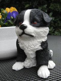 beeldje/asbeeldje/urn Border Collie puppy