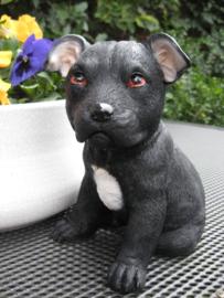 beeldje/asbeeldje/urn Staffordshire Terriër puppy zwart