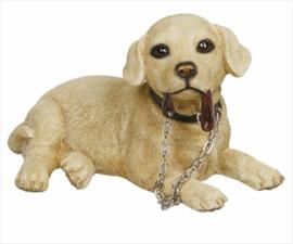 beeldje Labrador blond met riem liggend