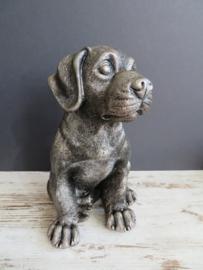 asbeeld/urn Rottweiler | 24 cm