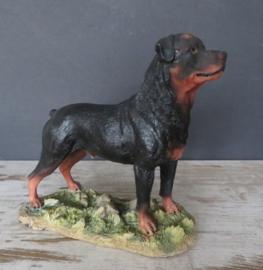 beeldje Rottweiler reu staand