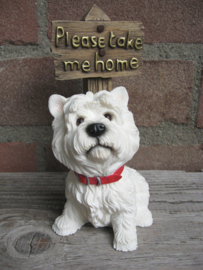 beeldje West Highland White Terriër 'Please take me home'