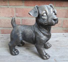 asbeeld/urn Jack Russell Terriër puppy staand | 22 cm