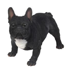 beeld/asbeeld/urn Franse Bulldog zwart | 50 cm
