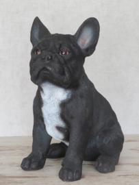 beeld/asbeeld/urn Franse Bulldog zwart | 30 cm