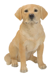 beeld/asbeeld/urn Labrador blond | 40 cm