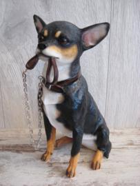 beeldje Chihuahua korthaar tricolour met riem