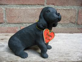beeldje Amerikaanse Cocker spaniel puppy zwart