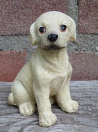 beeldje zittende blonde Labrador puppy