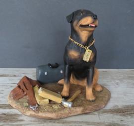 beeld 'klussende' Rottweiler