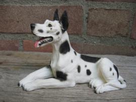 beeldje Duitse Dog liggend harlequin