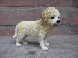 beeldje Cockapoo blond