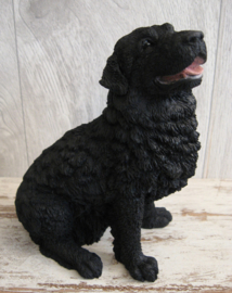 beeldje Newfoundlander zwart  zittend