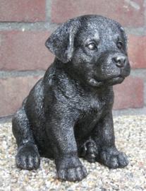 asbeeldje/urn Rottweiler puppy
