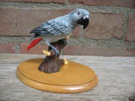 beeldje Grijze Roodstaart papegaai