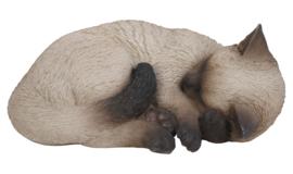 beeld/asbeeld/urn Kat slapend colourpoint