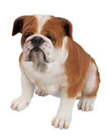 beeld/asbeeld/urn Engelse Bulldog | 38 cm
