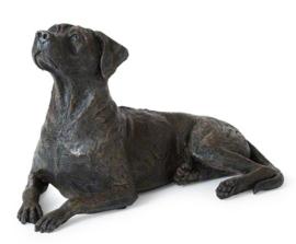 asbeeld/urn Rhodesian Ridgeback | 43 cm