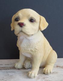 beeldje/asbeeldje/urn blonde Labrador puppy