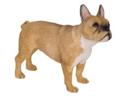 beeldje Franse Bulldog beige