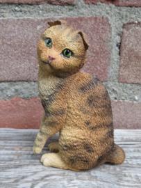 beeldje Scottish fold bruin tabby