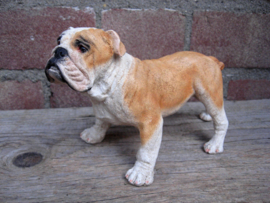beeldje Engelse Bulldog staand