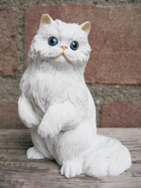 beeldje witte Perzische kat/Pers